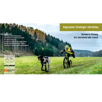 Einsteigerworkshop Dogscooting